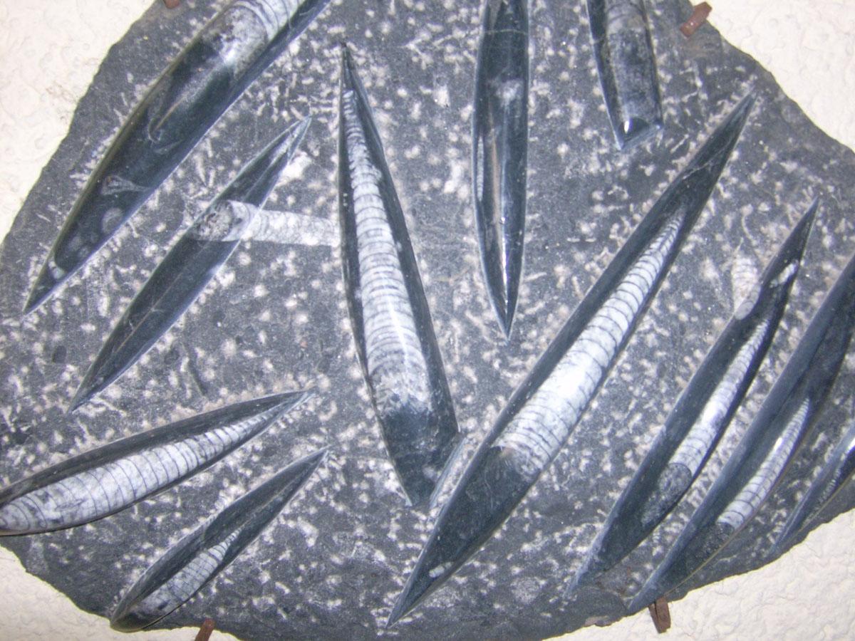 Fossilien_zwei